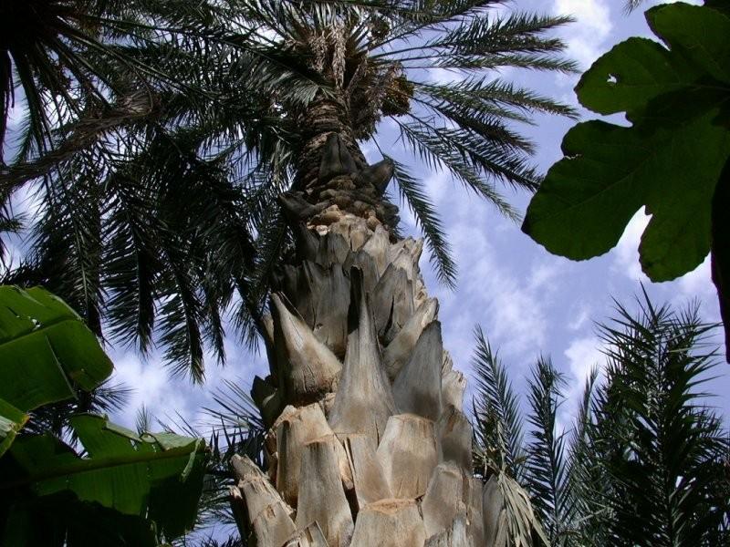 Palm ørken dating sites